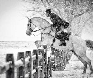 horse, snow, and jump image