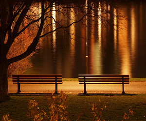 bench, beautiful, and leaves image