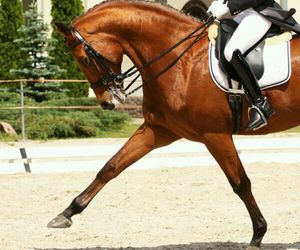 horse, dressage, and horseriding image