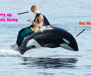 exo, whale, and luhan image