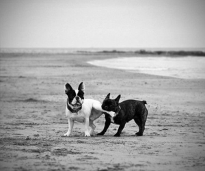 dog, beach, and black and white image
