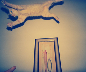 awesome, cat, and Flying image