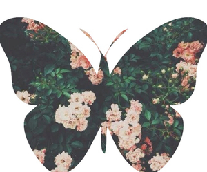 butterfly, flowers, and love image