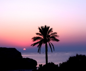 awesome, palm, and sunset image