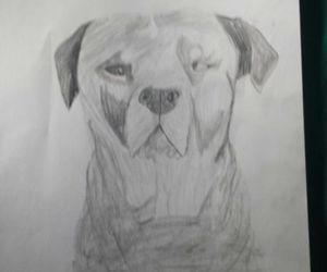 dog, drawing, and rottweiler image