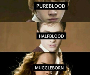 harry potter, hermione granger, and halfblood image