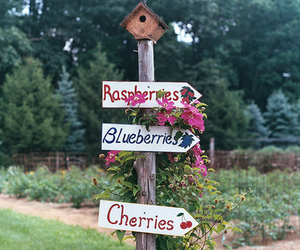 cherry, blueberry, and raspberry image