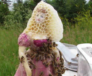 bees and honeycomb image