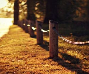 autumn, fence, and bokeh image