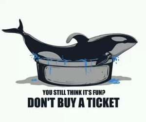 quote, seaworld, and blackfish image