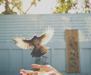bird, photography, and fly image