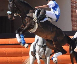 cheval, saut, and competition image