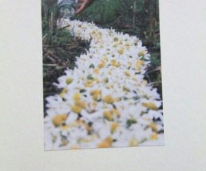 flowers, spring, and vintage image