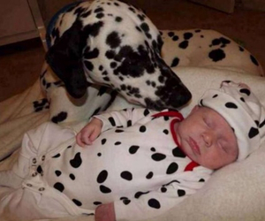 baby, dog, and dalmatian image