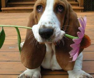 cute dogs, love you, and love image