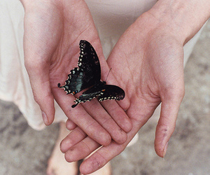 butterfly, hands, and grunge image
