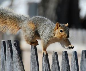 squirrel and cute animals image