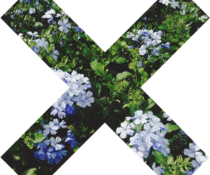 flowers, nature, and x image