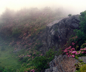 flowers, fog, and nature image