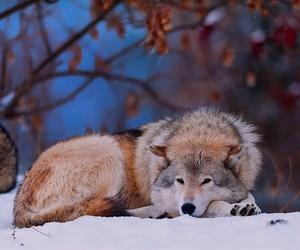 wolf, animal, and snow image