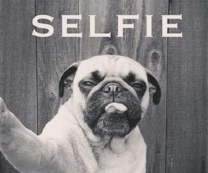 dog and selfie image
