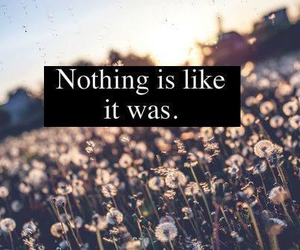 quote, flowers, and nothing image