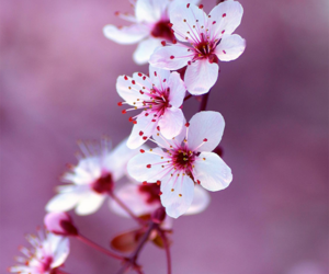 flowers, spring, and nice image