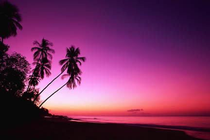 Sunsets: Sunrise Tree Clouds Nature Orange Beauty Morning Sky ...