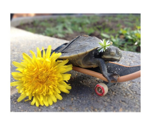 turtle, cute, and dressups image