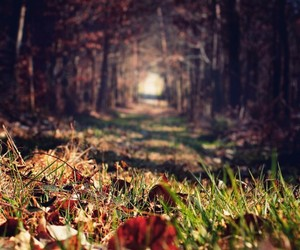 forest, photography, and nature image