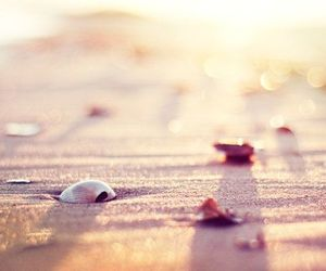 beach, shell, and sand image