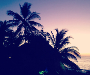 beautiful, coconut, and palm trees image