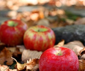 apple, autumn, and leaves image
