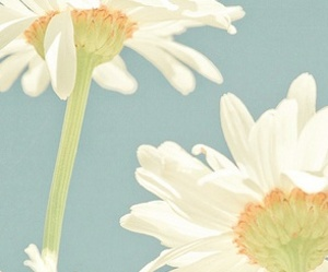 flower, photography, and white image