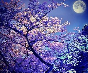 blossom, blue, and night image