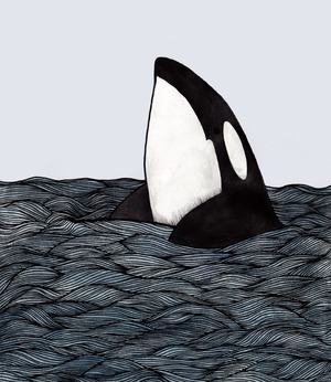 drawing, orka, and killerwhale image