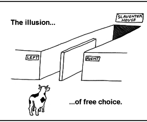 choice, illusion, and cow image