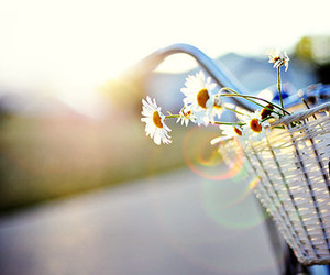 flowers, bike, and daisy image
