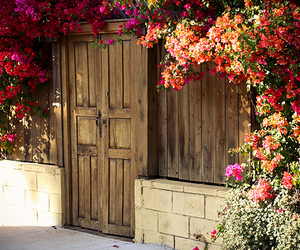flowers, door, and photography image