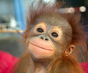 animal, monkey, and funny image