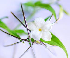 flower, jasmine flower, and fragrance image