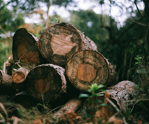 forest, photography, and wood image