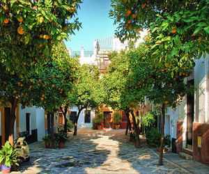 spain, orange, and tree image