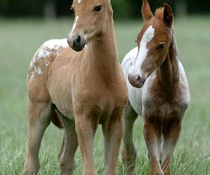 foals and horse image