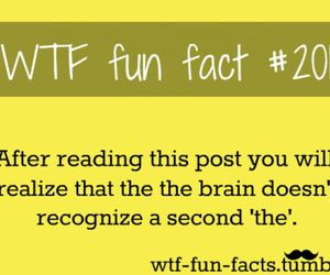 wtf, fact, and funny image