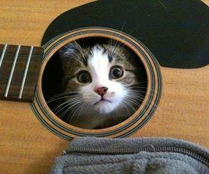 cat, guitar, and kitten image