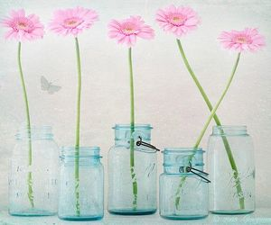 pink, daisy, and flowers image