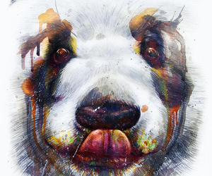animals, art, and panda image