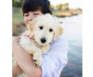 dog, cute, and hayes grier image