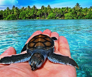 turtle, ocean, and summer image